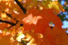 Beautiful Bennington Vermont October 2013