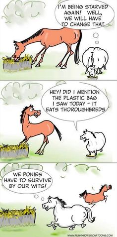 This is my granddaughter's mini to a T. - Horses Funny - Funny Horse Meme - - This is my granddaughter's mini to a T. The post This is my granddaughter's mini to a T. appeared first on Gag Dad. Funny Horse Memes, Funny Horse Pictures, Funny Horses, Cute Horses, Pretty Horses, Horse Love, Beautiful Horses, Funny Animals, Horse Humor
