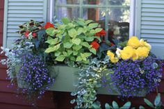 "I love these window boxes with great plant ideas! Especially for the ""black thumb"" gardener:)"
