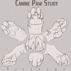 Canine Paw Study/Angles/Tutorial by TIFFASHY on DeviantArt OH WOW SUCH FEEDBACK! Thank you all! -Program that i use is always PhotoShop I did some Photo manipulation on my-self in the beginning. i hope you did learn a bit of enjoy my dea… Animal Sketches, Animal Drawings, Art Sketches, Art Drawings, Drawing Animals, Art Reference Poses, Design Reference, Drawing Reference, Dog Anatomy