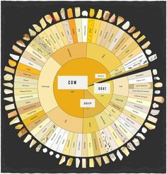 Today is National Cheese Day today. Pop Chart Lab created this infographic, The Chartered Cheese Wheel, which maps out 66 different types of cheeses arou. Fromage Cheese, Kinds Of Cheese, Cheese Types, Cheese Lover, Cheese Tasting, Wine Tasting, Beer Tasting Parties, Wine Cheese, Cheese Food