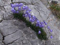 Pflanzen fürs Kiesbeet - 15 Tipps für Bepflanzung und Pflege