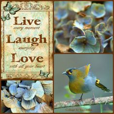 Love Collage, Color Collage, Beautiful Collage, Mood Colors, Calming Colors, Collages, I Need A Hobby, Photo Mosaic, Color Quotes
