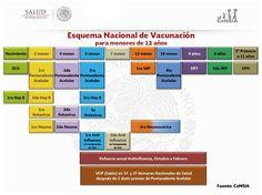 Esquema nacional de vacunación  para menores de 12 años en México. Actualmente el esquema de vacunación protege contra 13 enfermedades.