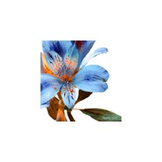 Blue Tiger Lily ❤ liked on Polyvore