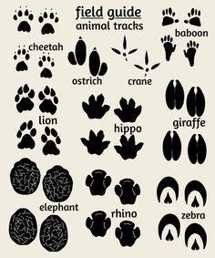 african animal footprints - Google keresés