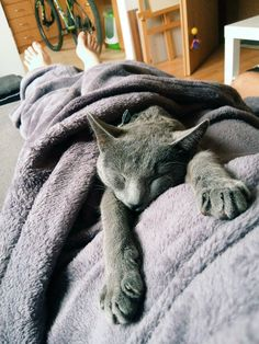 Sweet Sunday Sweet Sundays, My World, Cats, Animals, Gatos, Animales, Animaux, Kitty, Cat