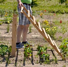 trellis for vegetables and lettuce with notch in Hamburg NY
