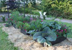 Nu är det många som bygger nya odlingar, i pallkragar och på friland, i krukor och växthus.  Ifjol anlade vi också en lite mindre odling, ...