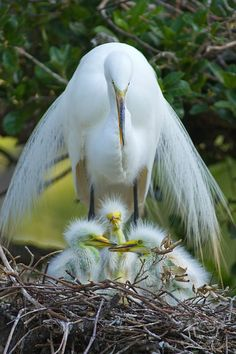 Protective mommy