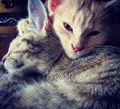 cute kittens {Eli's Meadows}