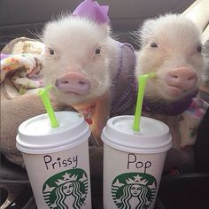 Instagram's Most Adorable Pair Of Piglets #refinery29  http://www.refinery29.com/prissy-pig-instagram#slide1  They got it right for once.