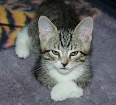 can i help you? by Elizabeth Sztejner Skillings - friends kitten Buddy Click on the image to enlarge.