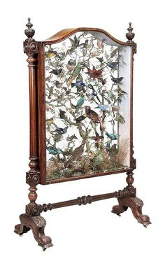 early Victorian walnut and glass-cased shadow box fire screen with taxidermy birds by jeanette Victorian Furniture, Victorian Decor, Victorian Homes, Victorian Era, Victorian Fashion, Antique Furniture, Geek Furniture, Victorian Hair, Victorian Interiors