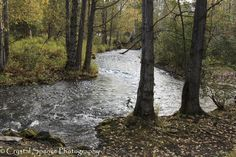 Fall at Chester Creek, Anchorage Alaska