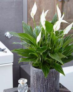 Viirivehka Plants, Plant, Planets