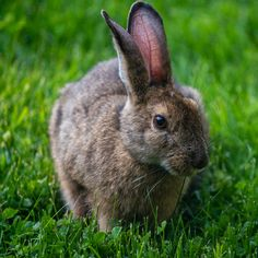 Snowshoe Hare. Snowshoe Hare, Definition Of Love, Photography, Animals, Photograph, Animales, Animaux, Photo Shoot, Animal