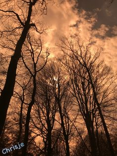 Beautiful Trees Photo by Chrisje!