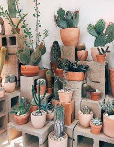Cactus store in Echo Park, LA. Cactus store in Echo Park, LA Cacti And Succulents, Cactus Plants, Garden Plants, Indoor Plants, House Plants, Indoor Cactus, Cactus Art, Cactus Decor, Succulent Terrarium