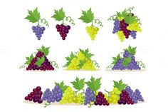 Collection of Grapes Sorts