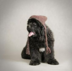 this dog is my twin same hats