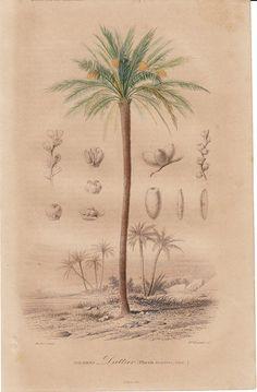 1867 Antique BOTANICAL print by Charles by TwoCatsAntiquePrints, $18.00
