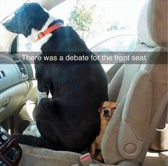 There was a debate about the front seat. Enjoy RUSHWORLD boards, BARK RUFFINGTON'S DOG KINGDOM, LULU'S FUNHOUSE and UNPREDICTABLE WOMEN HAUTE COUTURE. Follow RUSHWORLD! We're on the hunt for everything you'll love!