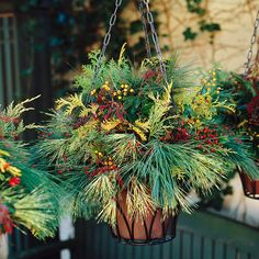 Holiday Hanging Basket. I usually take my hanging baskets down once the summer flowers are done, never thought to keep the baskets up and fill them with evergreens. I love this!