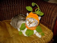 They& cute, cuddly, and in COSTUMES! (no cats were harmed in the process) Pet Costumes, Halloween Costumes, Halloween Dress, Pumpkin Costume, Cat Pumpkin, Pumpkin Vine, Fancy Cats, Cat Dresses, Funny Outfits