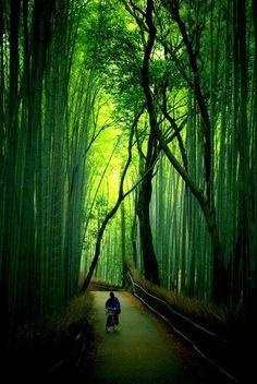 The Bamboo Forest at Arishiyama - Kyoto, Japan...
