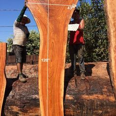 Catalog - Big Wood Slabs Wood Slab Table, Hardwood Lumber, Woods, Catalog, Big, Collection, Woodland Forest, Forests