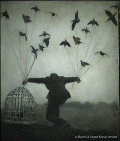 Bird Ephemera: Dream birds