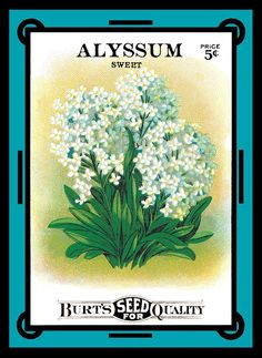 Sweet Alyssum Seed Pack Refrigerator Magnet by LABELSTONE on Etsy