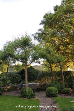 Nice Weidenpavillon Weiden flechten Willow tree Sitzplatz Schatten DIY Gartengestaltung