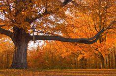 Ontario autumn