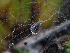 What Tangled Webs We Weep photo by Marsha Pokorny