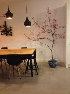Mooie japanse bloesemboom van 180 cm hoog. Gezien op eigen huis en tuin en vt wonen en menig japans restaurant! Een echte eyecatcher in huis! Al vanaf 60 euro!   Wil jij deze ook in huis hebben? Ze staan op marktplaats als je zoekt op ' japanse bloesem' of mail naar masquelle@hotmail