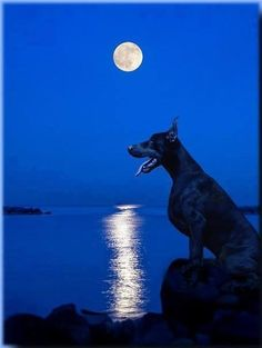 #Doberman this would make an awesome scenic drawing