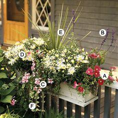 A. Petunia 'Surfinia Patio Hot Pink' -- 1  B. Salvia 'Victoria Blue' -- 1  C. Geranium (Pelargonium 'StarStruck Lavender Pink') -- 1  D. Mum (Chrysanthemum 'Brunswick') -- 2  E. Dracaena marginata -- 1  F. Vinca major 'Variegata' -- 1