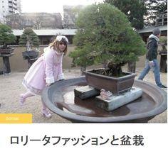 ロリータファッションと盆栽 | A!@attrip    (via http://attrip.jp/65268 )