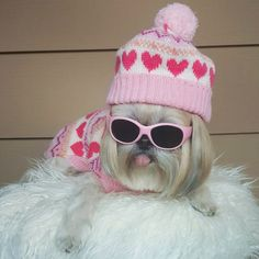 The Pros and Cons of Dressing Up Your Dog Havanese Puppies, Teacup Puppies, Dogs And Puppies, Funny Dog Images, Funny Dogs, Dog Halloween Costumes, Dog Costumes, Dressed Up Dogs, Sassy Diva