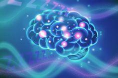 Científicos del MIT han activado usando la luz (optogenética) una región específica del cerebro de ratones, y han demostrado así que a estos les puede entrar somnolencia solo con eso, sin llegar a dormirse del todo. Este efecto señala que el cerebro no siempre está completamente dormido...