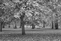valentines park ilford events 2012