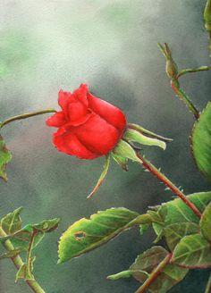 Red long stem rose watercolor painting by Arkansas artist Sheri Hart