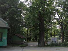 #magiaswiat #podróż #zwiedzanie #polska #blog #europa #jaworze #park #amfiteatr # teznie # fontanna #ławeczka Trunks, Park, Plants, Blog, Europe, Drift Wood, Tree Trunks, Parks, Blogging