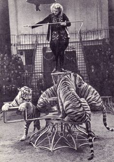 Margarita Nazarova, Russian animal trainer- tame those cats! Circus Pictures, Old Pictures, Old Photos, Antique Photos, Old Circus, Night Circus, Vintage Circus Photos, Vintage Circus Performers, Circo Vintage