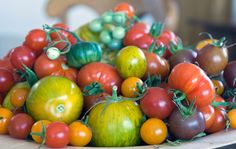 Tomaatti suojaa syövältä ja sydäntaudeilta – katso huimat terveysvaikutukset ja nappaa reseptit