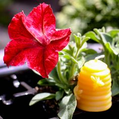 Candle Store, Beeswax Candles, Pure Products, Plants, Candle Shop, Plant, Planets