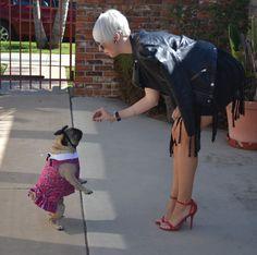 Pug jump for treats!