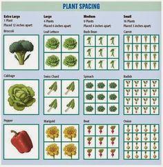 Square Foot Gardening Answer Book: New Information From The Creator Of Square  Foot Gardening   The Revolutionary ... (Paperback) | Gardening | Pinterest  ...